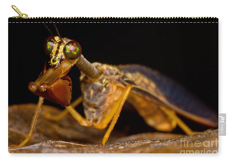 Mantispid Carry-all Pouch featuring the photograph Tropical Mantispid by Dant� Fenolio