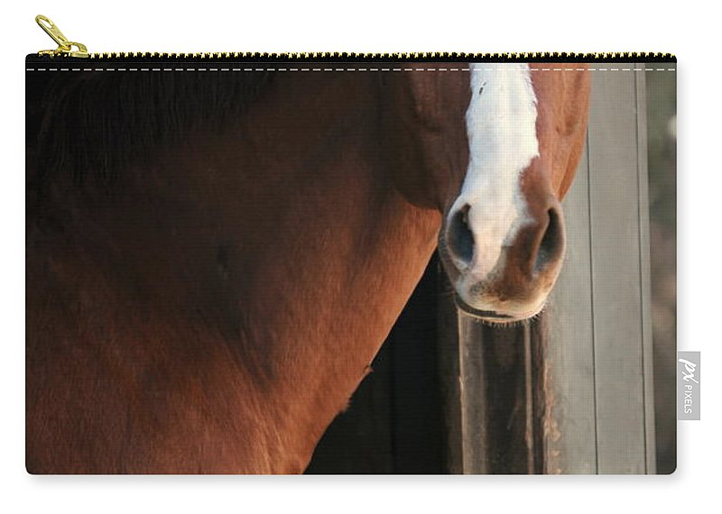 Thoroughbred Carry-all Pouch featuring the photograph T's Window by Angela Rath