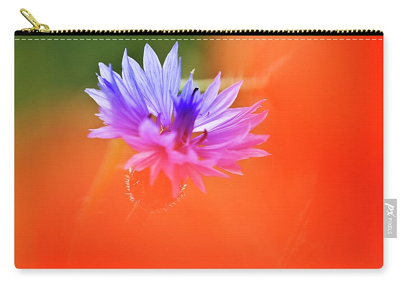 Cornflower Carry-all Pouch featuring the photograph Tucked Away 2 by Heiko Koehrer-Wagner