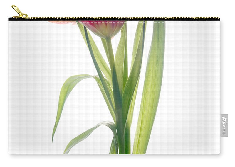 Tulip Carry-all Pouch featuring the photograph Tulip by Ann Garrett