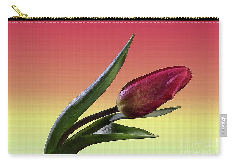 Tulip Carry-all Pouch featuring the photograph Tulip Love by Tod and Cynthia Grubbs