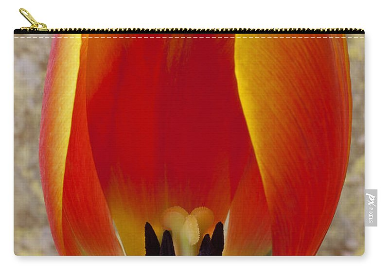 Orange Yellow Tulip Carry-all Pouch featuring the photograph Tulip Petals by Garry Gay