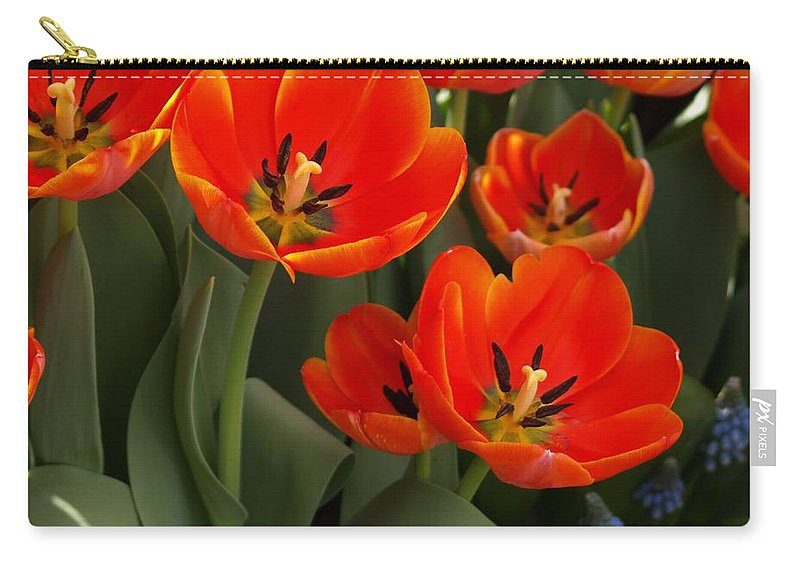 Ann Keisling Carry-all Pouch featuring the photograph Tulip Power by Ann Keisling