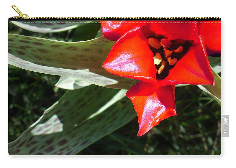 Tulip Carry-all Pouch featuring the photograph Tulip by Steve Karol