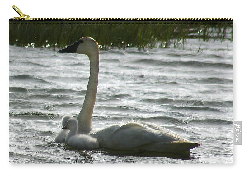 Swans Carry-all Pouch featuring the photograph Tundra Swan And Signets by Anthony Jones