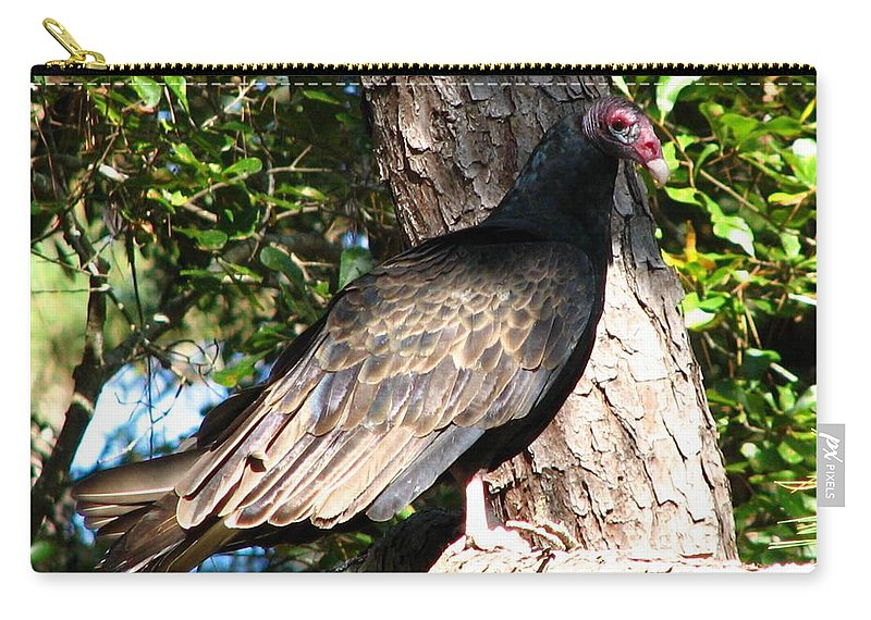 Turkey Buzzard Carry-all Pouch featuring the photograph Turkey Buzzard by J M Farris Photography