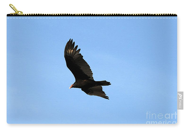 Turkey Vulture Carry-all Pouch featuring the photograph Turkey Vulture by David Lee Thompson