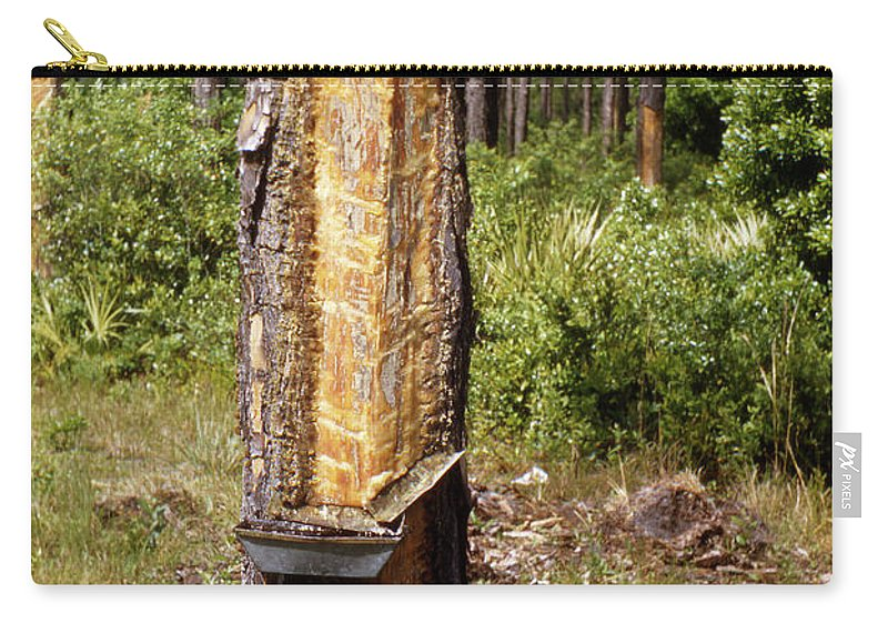 Turpentine Carry-all Pouch featuring the photograph Turpentine Tree by Marilyn Hunt