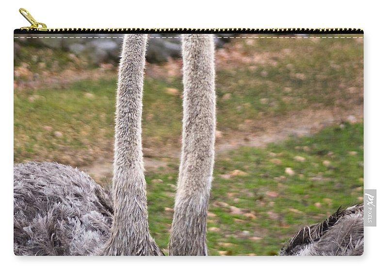 Ostrige Carry-all Pouch featuring the photograph Twins by Douglas Barnett