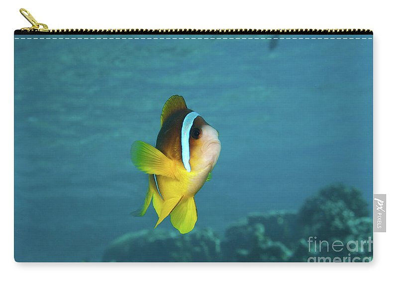 Coral Carry-all Pouch featuring the photograph Two-banded Clownfish by Hagai Nativ