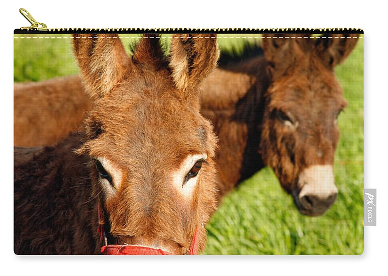 Animals Carry-all Pouch featuring the photograph Two Donkeys by Gaspar Avila