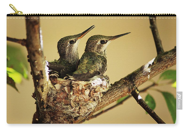 Hummingbirds Carry-all Pouch featuring the photograph Two Hummingbird Babies In A Nest by Xueling Zou