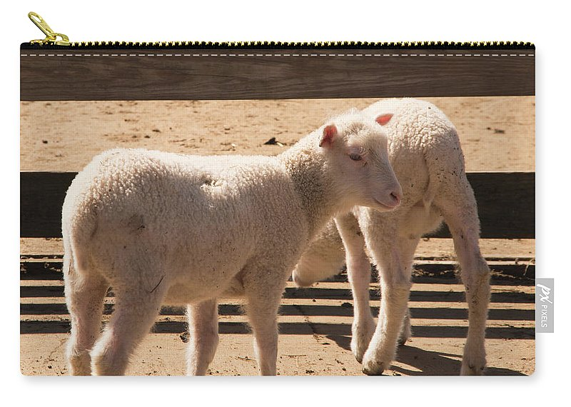 Sheep Carry-all Pouch featuring the photograph Two Little Lambs. by Diane Schuler