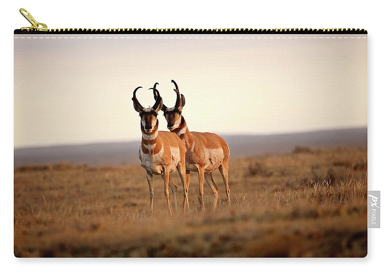Pronghorn Antelope Carry-all Pouch featuring the digital art Two Male Pronghorn Antelopes In Alberta by Mark Duffy
