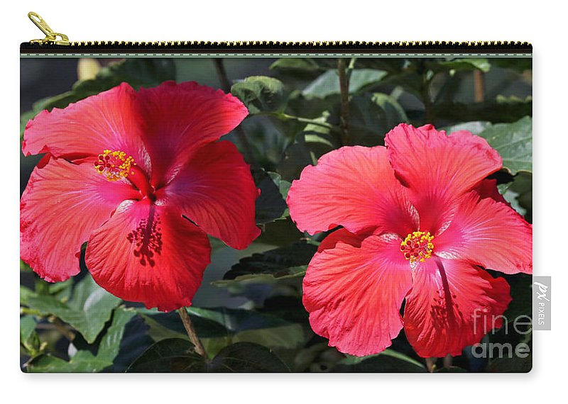 Hibiscus Carry-all Pouch featuring the photograph Two Red Hibiscus With Border by Carol Groenen