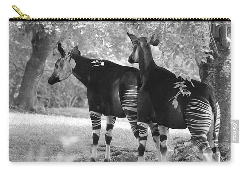 Animal Carry-all Pouch featuring the photograph Two Stipers In Black And White by Rob Hans