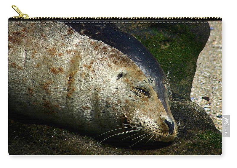 Seal Carry-all Pouch featuring the photograph Two Tone Seal by Anthony Jones