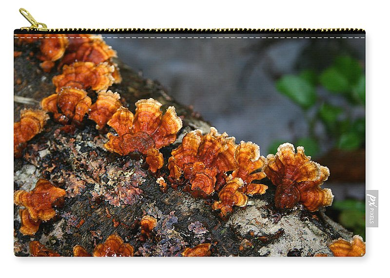 Bright Orange Nature Wet Forest Fungus Tree Wood Closeup Macro Carry-all Pouch featuring the photograph Unexpected Brightness by Andrei Shliakhau