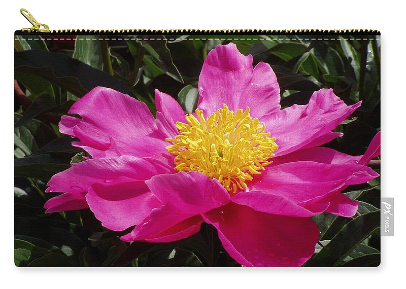 Rose Carry-all Pouch featuring the photograph Unfolding by Ian MacDonald