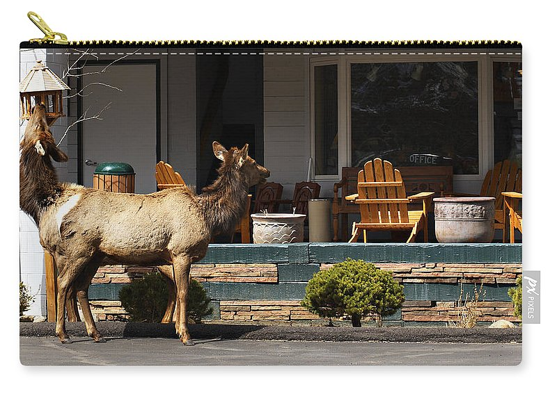 Elk Carry-all Pouch featuring the photograph Elk Srtolling Through Town by Marilyn Hunt
