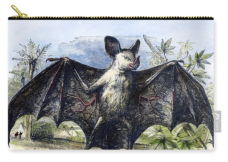 19th Century Carry-all Pouch featuring the photograph Vampire Bat by Granger