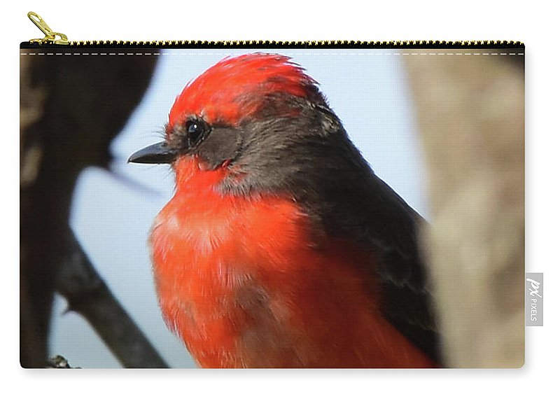 Vermilion Carry-all Pouch featuring the photograph Vermilion Flycatcher by Dwight Eddington