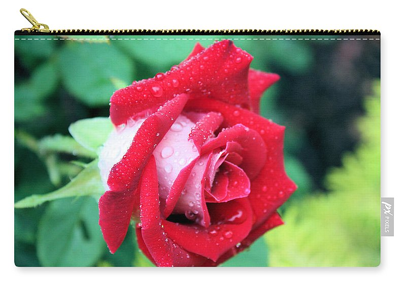 Rose Carry-all Pouch featuring the photograph Very Dewy Rose by Kristin Elmquist
