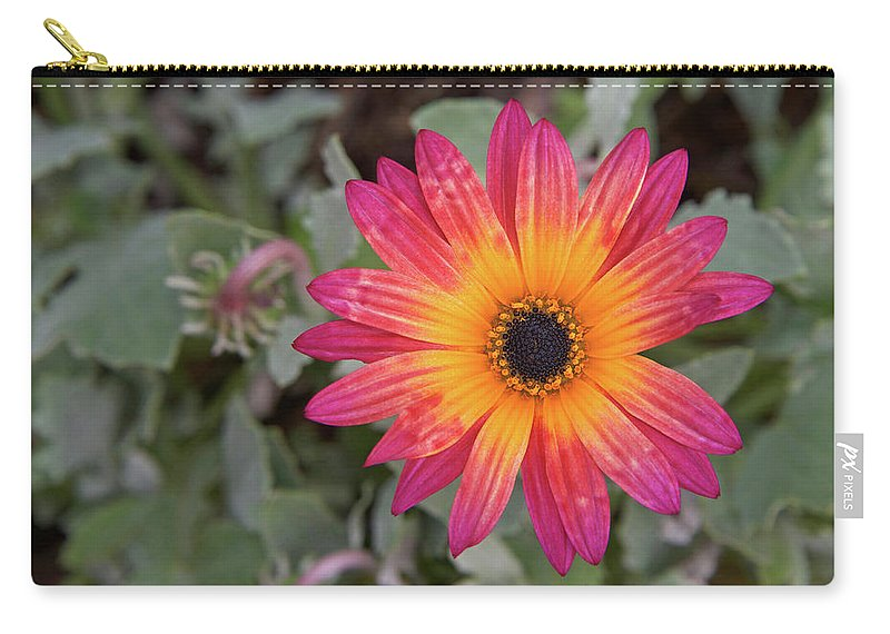Flower Carry-all Pouch featuring the photograph Vibrant African Daisy by Sheila Fitzgerald