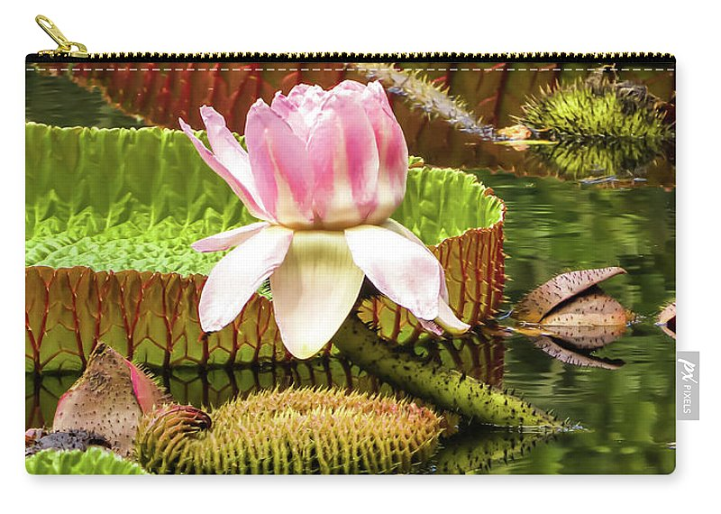 Victoria Cruziana Carry-all Pouch featuring the photograph Victoria Cruziana Waterlily by Zina Stromberg