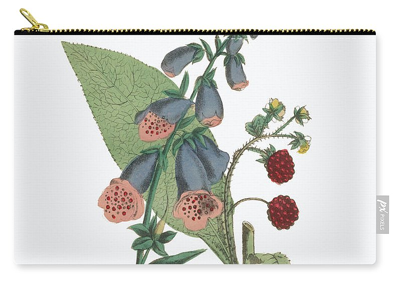 Foxglove Carry-all Pouch featuring the painting Victorian Botanical Illustration Of Foxglove And Common Raspberry by Peacock Graphics