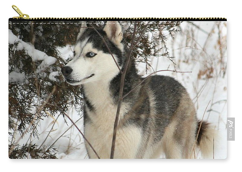 Animal Carry-all Pouch featuring the photograph Vigilant by David Dunham
