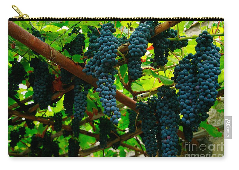 Countryside Carry-all Pouch featuring the photograph Vines by Gaspar Avila