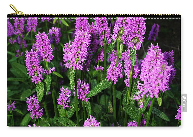 Carry-all Pouch featuring the photograph Violet by Jamie Lynn