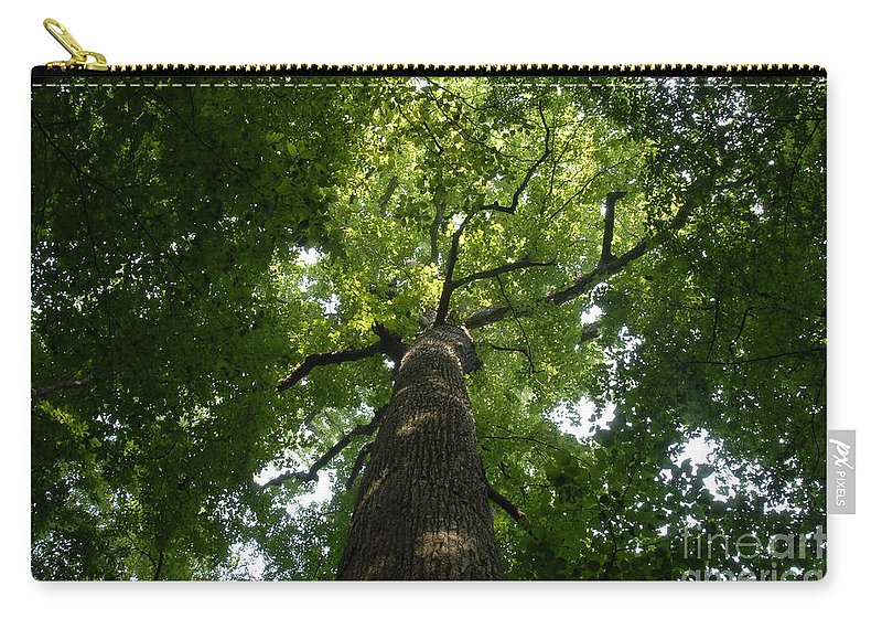 Joyce Kilmer Memorial Forest Carry-all Pouch featuring the photograph Virgin Canopy by David Lee Thompson