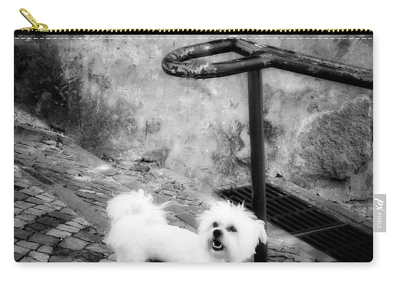 Dog Carry-all Pouch featuring the photograph Waiting by Diana Rajala