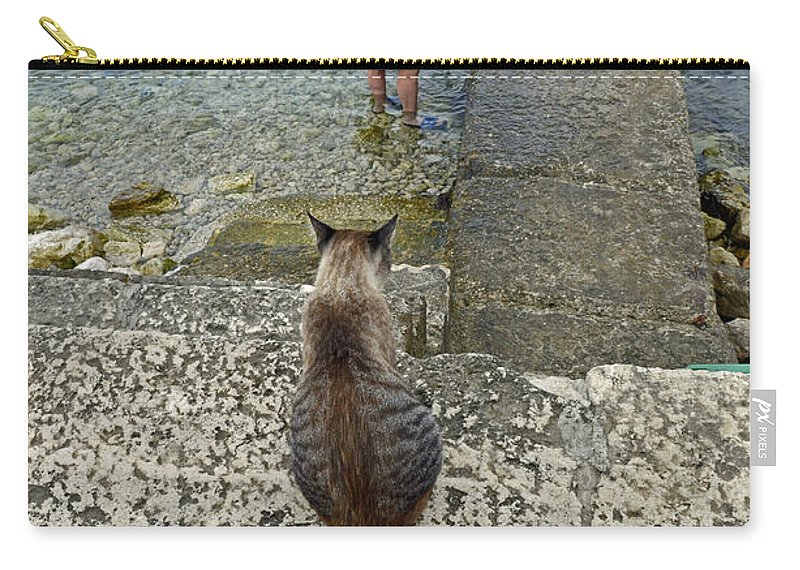 Cat Looking For Food Carry-all Pouch featuring the photograph Waiting For A Meal by Elaine Berger
