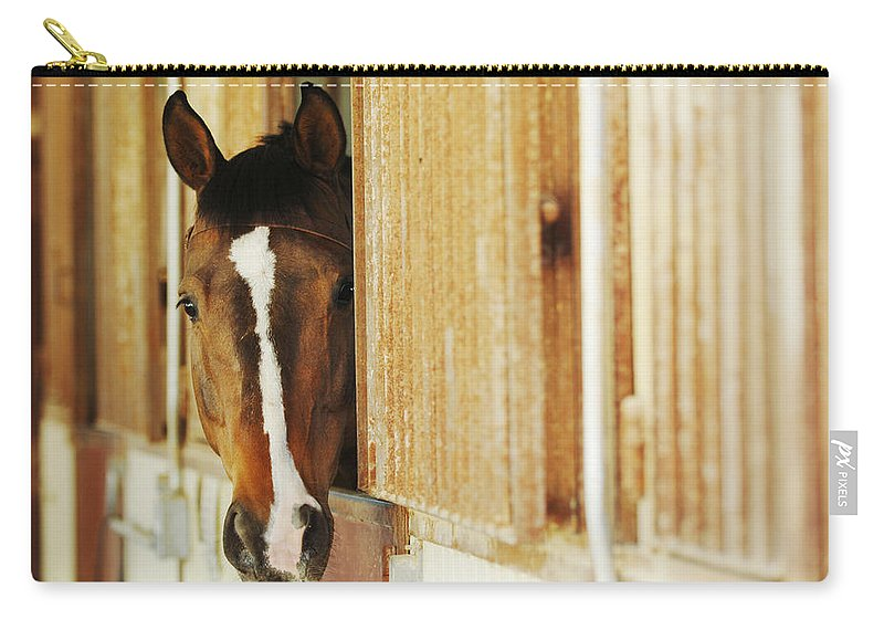 Animal Carry-all Pouch featuring the photograph Waiting For A Ride by Jill Reger