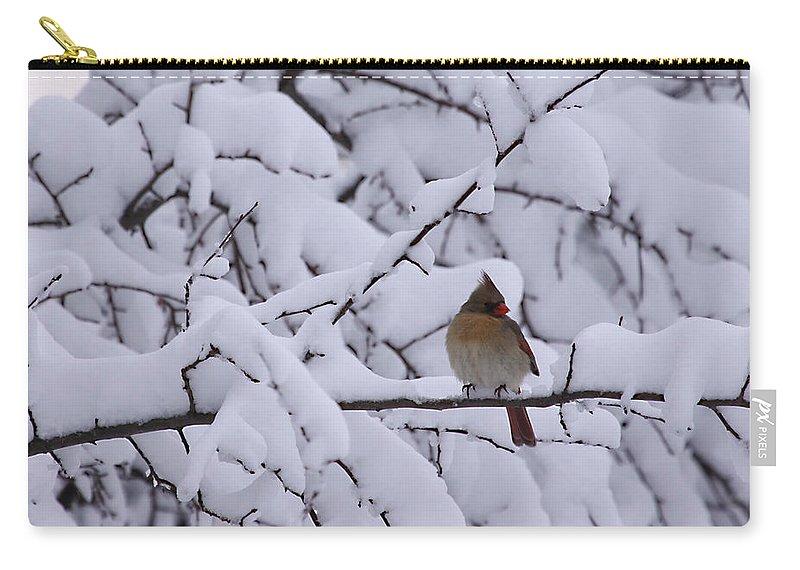 Female Cardinal Bird Wildlife Snow Season Winter Photograph Photographer Carry-all Pouch featuring the photograph Waiting For Mr. C by Shari Jardina