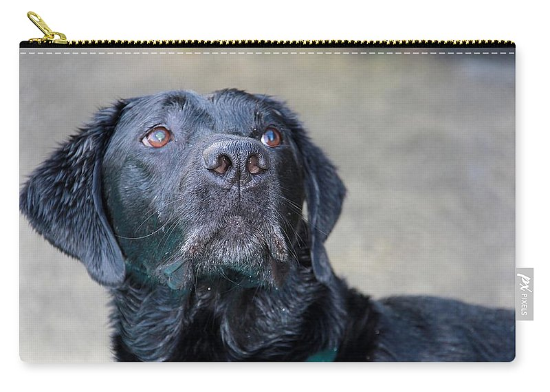 Photograph Carry-all Pouch featuring the photograph Waiting On Your Command by Sheila Wedegis