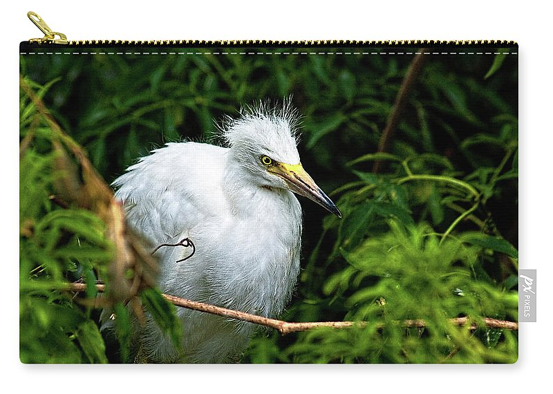 Egret Carry-all Pouch featuring the photograph Waiting Patiently by Christopher Holmes