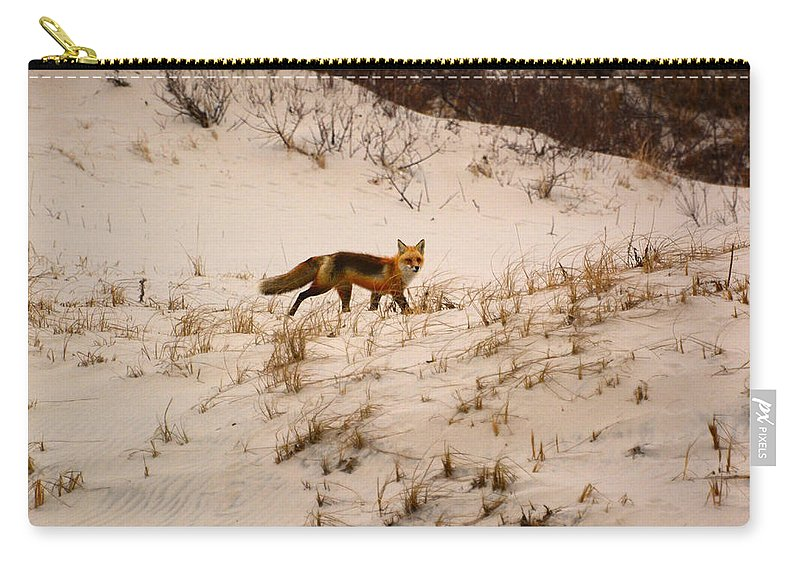 Walking Red Fox Carry-all Pouch featuring the photograph Walking Fox by Raymond Salani III