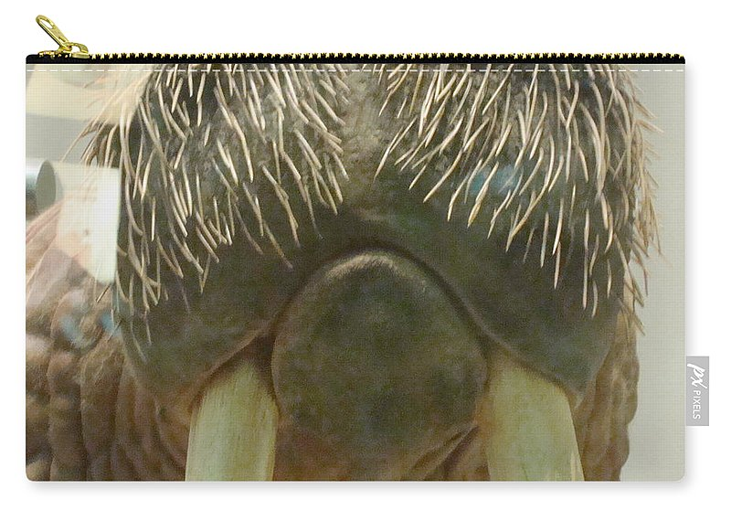Close Up Carry-all Pouch featuring the photograph Walrus Whiskers by Arlane Crump