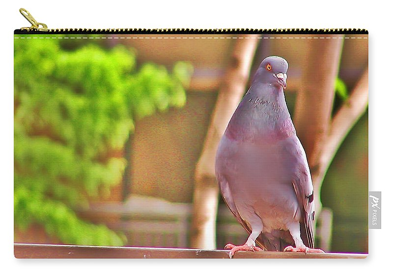 Pigeon Carry-all Pouch featuring the photograph Walter Pigeon by Bill Cannon