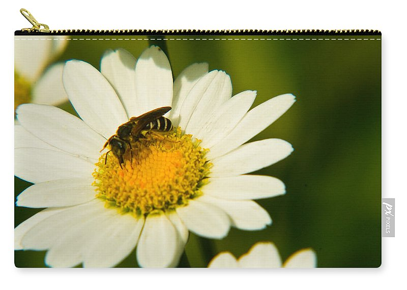 Wasp Carry-all Pouch featuring the photograph Wasp On Daisy by Douglas Barnett