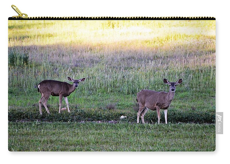 Deer Carry-all Pouch featuring the photograph Watching by Michael Brown