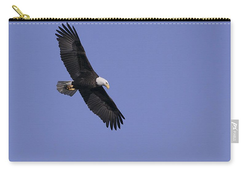 Eagle Carry-all Pouch featuring the photograph Watching by Mykel Davis