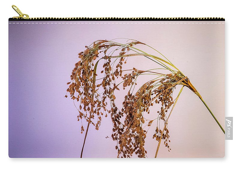Grass Carry-all Pouch featuring the photograph Drooping Teddy Bear Grass by Douglas Barnett