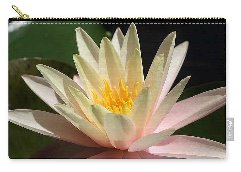 Water Lilly Carry-all Pouch featuring the photograph Water Lilly 1 by Kristina Jones