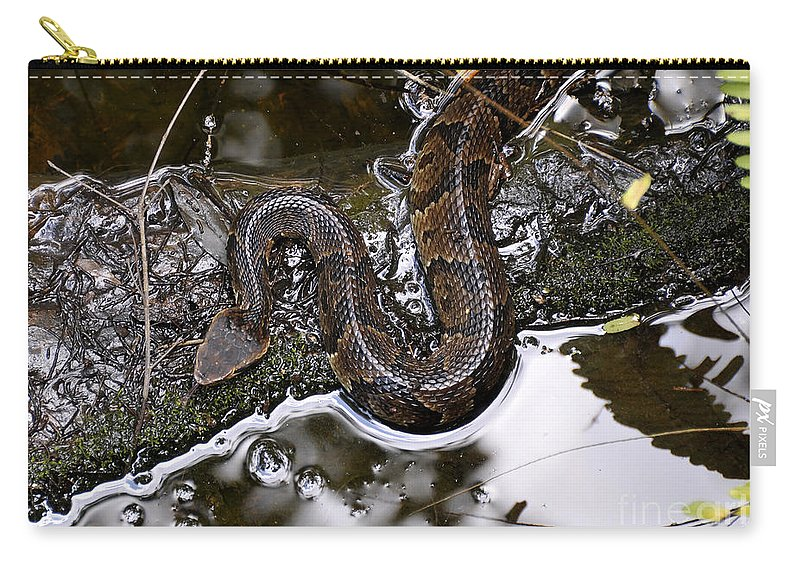 Water Moccasin Carry-all Pouch featuring the photograph Water Moccasin by David Lee Thompson