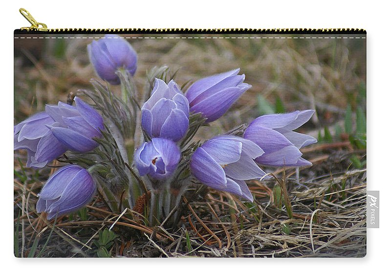 Pasque Flower Carry-all Pouch featuring the photograph Watercolor Pasque Flowers by Heather Coen
